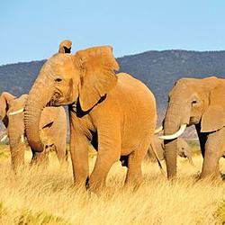 colt evaporative cooling elephant