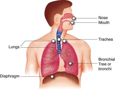 Smoke Body Diagram